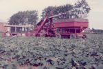 harvesting-cucumbers-on-the-vogelzang-farm