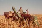 harvesting-corn-on-the-vogelzang-farm