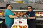 two-women-loading-apples-into-1-bushel-boxes-at-the-apple-place-in-simcoe-on