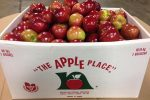 unknown-type-of-apples-loaded-into-a-1-bushel-box-at-the-apple-place-in-simcoe-on