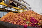 cherries-being-processed-at-the-norfolk-cherry-company-ltd