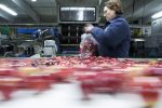 bagging-apples-at-the-apple-place